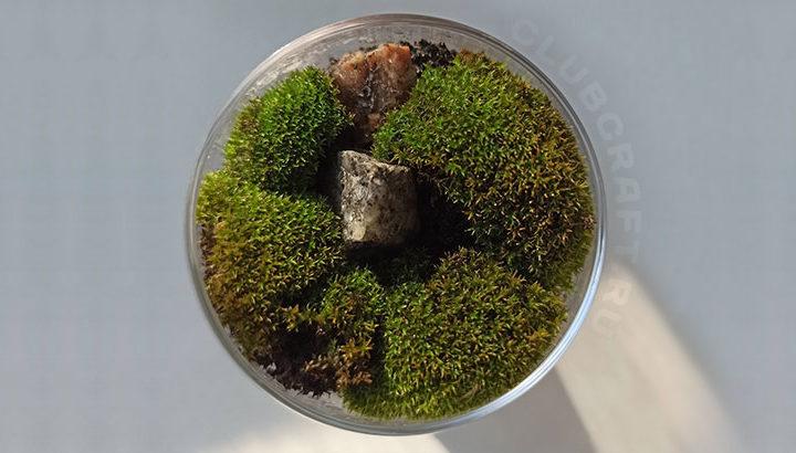 Как самому сделать флорариум (мини-сад)